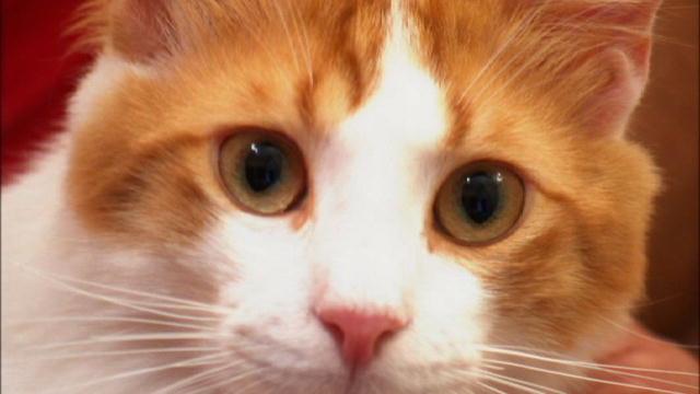 aegean_cat_3